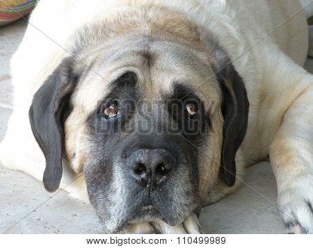 Big Dog Thinking