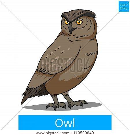 Owl bird learn birds educational game vector