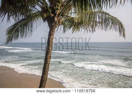 Beach In Varkala In Kerala State, India