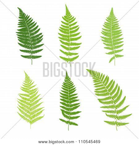 Set of fern frond silhouettes.