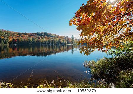 sunny morning in lake of Algonquin Provincial Park, Ontario, Canada