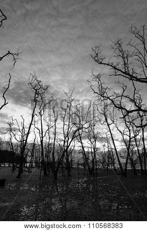 Dead forest at muddy beach at twilight low tide poster