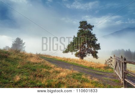 Tree on the hill mountain fog