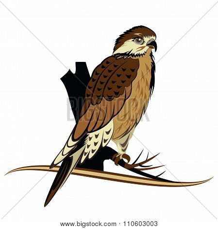 Bird Of Prey - Arabian Falcon