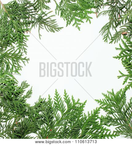 ever green fir tree decoration for christmas card isolated, new year pattern