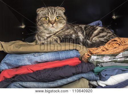 Cat Sprawled On Clothing In The Wardrobe