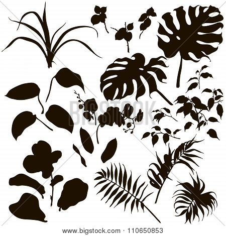 Set Of Tropical Plants Silhouette.