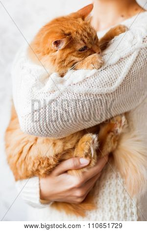 Woman In Knitted Sweater Holding Dozing Ginger Cat.