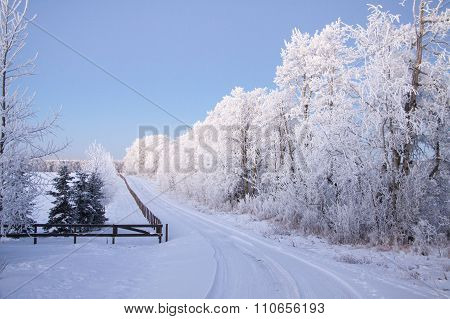 hoar frost and driveway