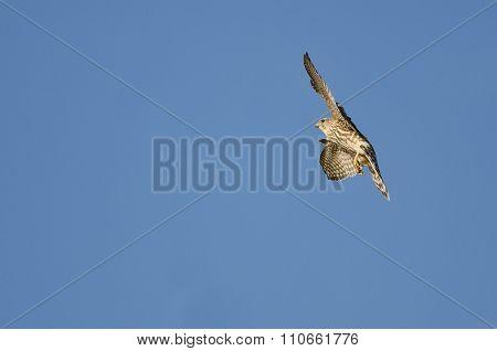 Merlin Falcon Flying In A Blue Sky