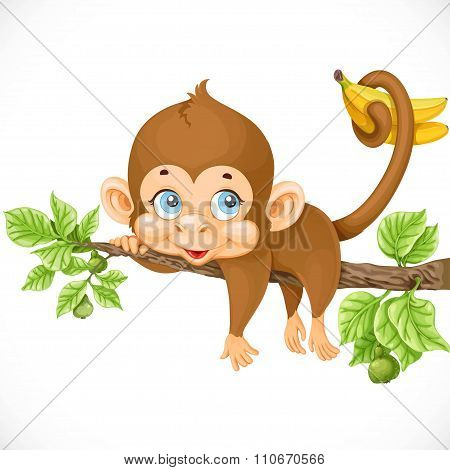 Cute Monkey Lazily Lying On A Branch And Holds The Tail Of Banan