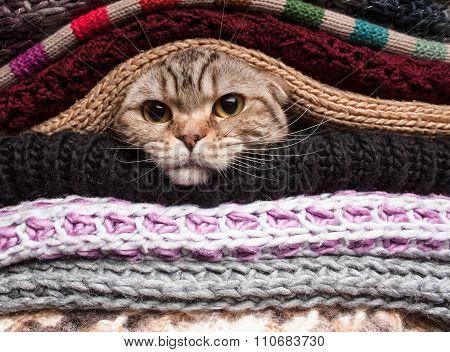 Pile Of Woolen Clothes