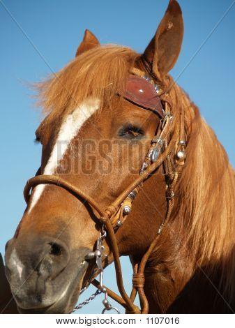 Horse Show 11