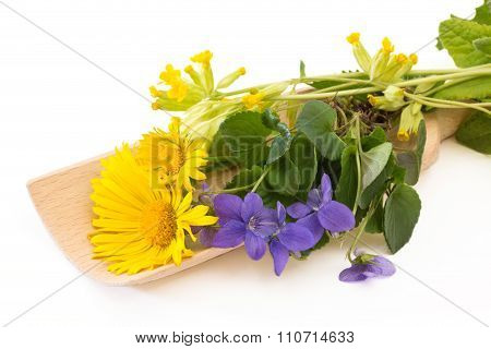 Coltsfoot And Violets On A Wooden Scoop
