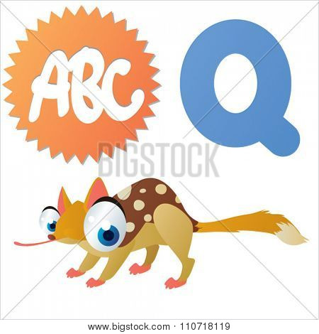 Vector cute funny colorful alphabet animals: Q is for Quoll