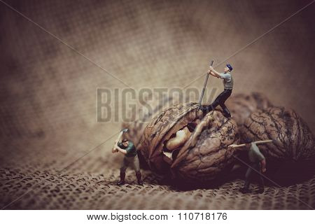 Miniature Worker With A Crowbar Trying To Open A Walnut. Color Tone Tuned Macro Photo