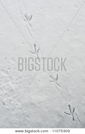 Duck foot prints on snow and ice going diagonal poster