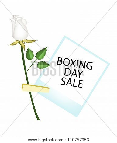Boxing Day Of Photo Frames With White Rose