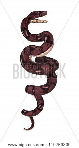 Anaconda Snake On White
