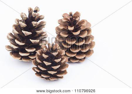 Pinecones On White Background