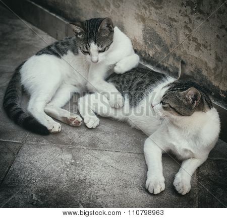 Two Homeless Cats Resting On The Street.