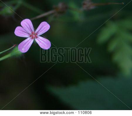 Gentle Purple Flower