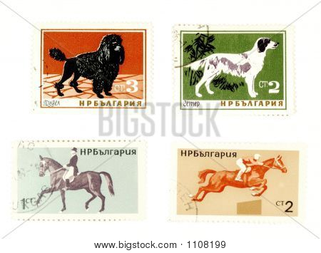 Old Postage Stamps With Dogs And Horses