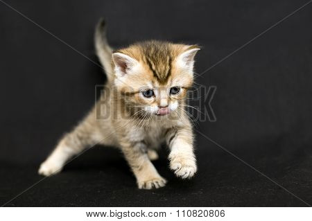 Funny kitten on a dark background.