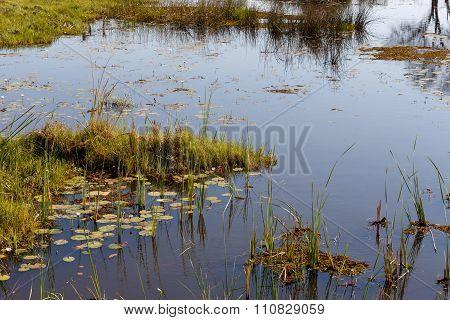 Landscape In The Okavango Swamps