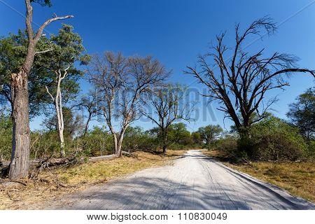 Gravel Road To Okavango Delta Moremi Park