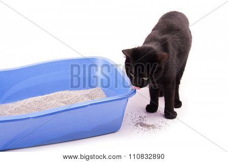Black cat standing next to a litter box, licking her nose, on white