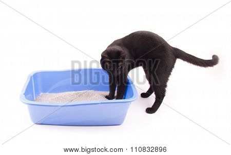 Black cat with her front paws in a blue litter box, on white