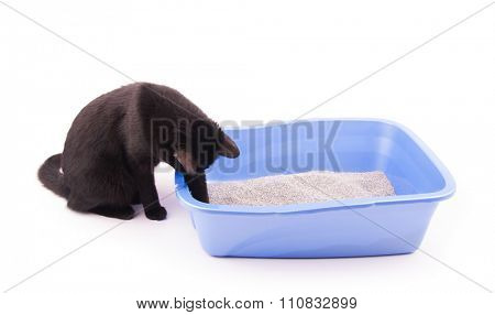 Black cat playing with sand in her litter box, on white