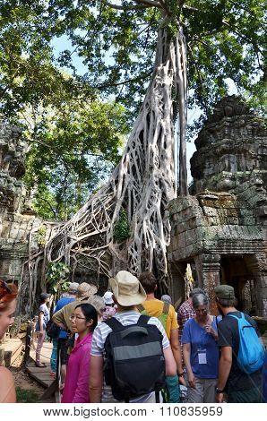Siem Reap, Cambodia - December 3, 2015: Tourists Visit Ta Prohm Temple At Angkor, Siem Reap