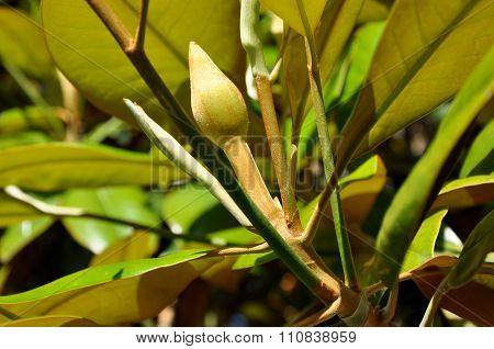 Velvety Flower Bud