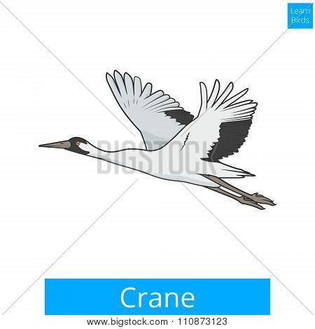Crane learn birds educational game vector