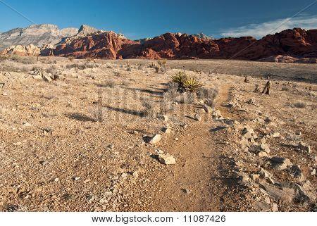 The Diversity of Red Rock Canyon