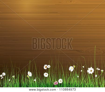 Spring nature background. Green grass and leaf plant White Gerbera, Daisy flowers over wood fence