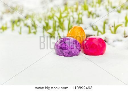 Easter Time In Snow