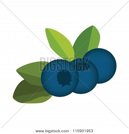 Blueberry, Leaves And Berries