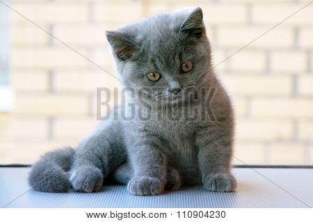 Smart looking little kitten. Cat view.