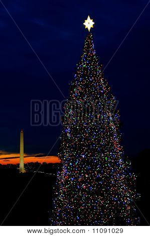 Washington Dc Christmas Tree