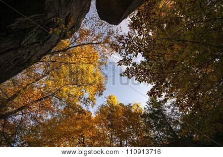 Fall Foliage Lit By Sun