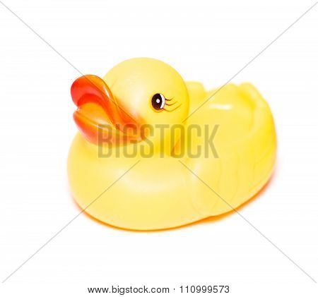 Rubber Baby Duck