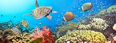 Underwater panorama with turtle coral reef and fishes poster