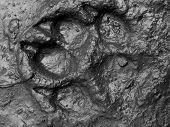 dog footstep illustration on the black dirt. poster