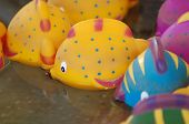 macro photo of toy fish. toy fish floating on water. carnival game fish. poster