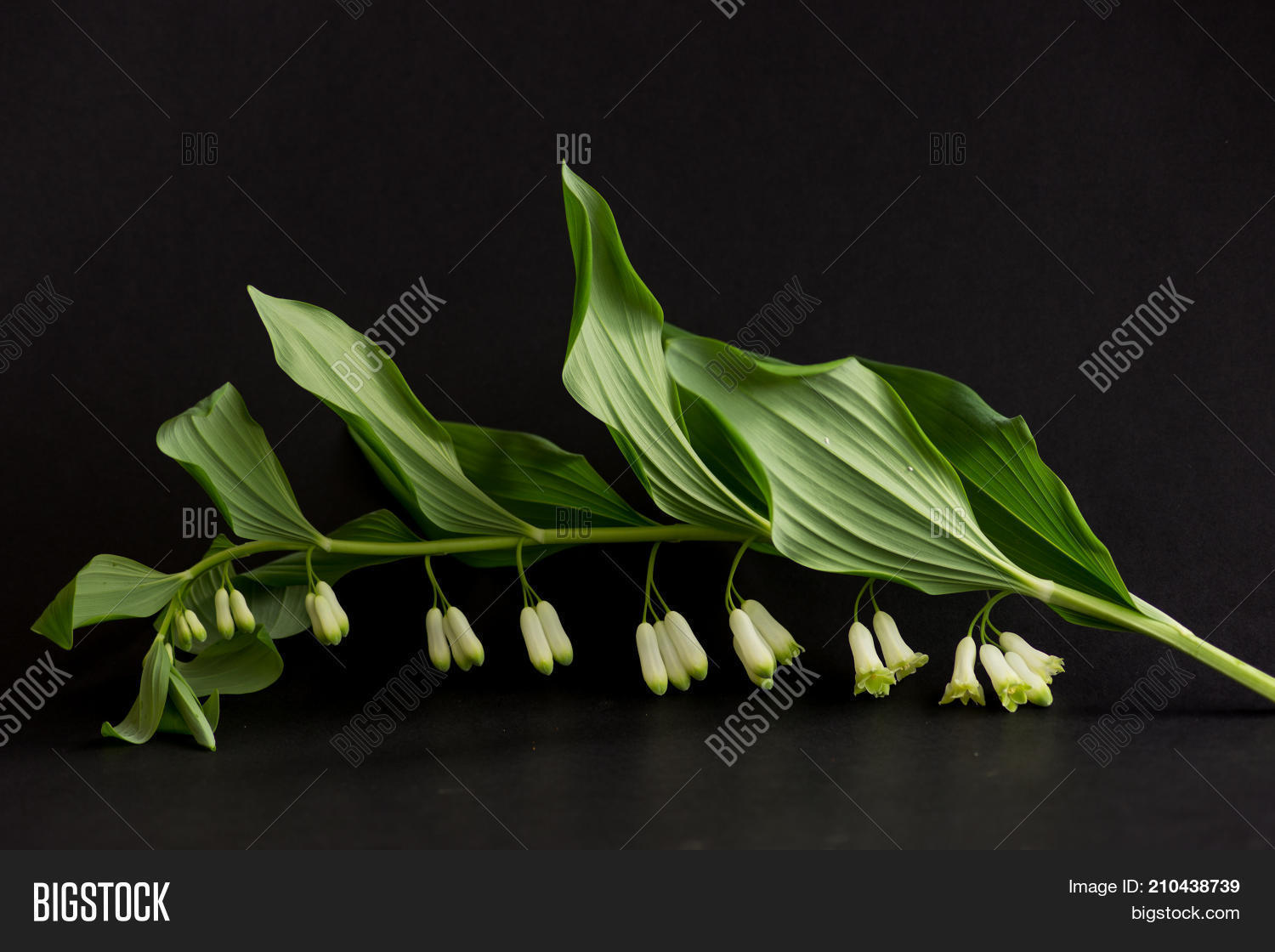 Little White Bell Image Photo Free Trial Bigstock