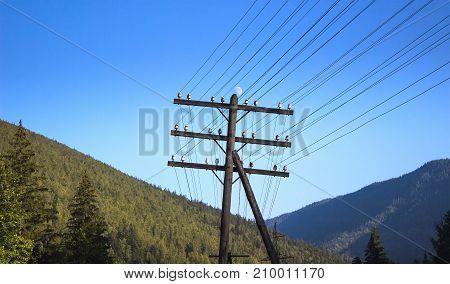 Electric Transmission Wood Pole