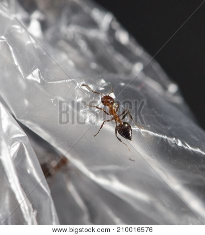 ant on cellophane . In the park in nature